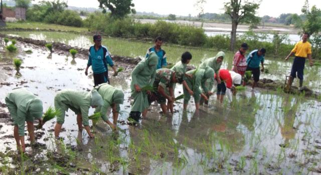 Kodim dan Pengurus Persit Kartika Pamekasan tanam padi di lahan tidur di Desa Bunder, Kecamatan Pademawu, Pamekasan.